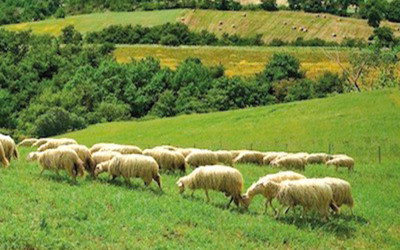 Carne ovina tra innovazione e nuovi sbocchi di mercato. Agricoltori e ricercatori a confronto sul tema